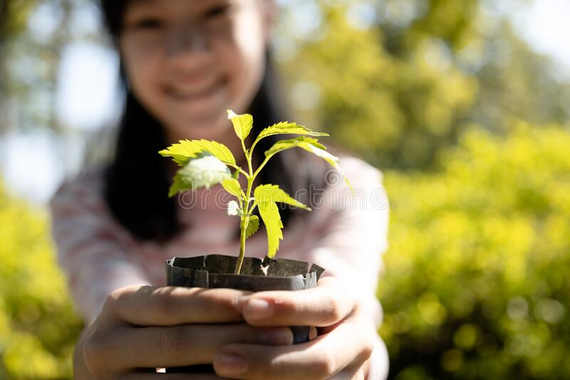 Smiling and happy asian child girl holding small tree for planting,female people showing young green plant in nature, campaign,. Help grow trees to reduce global royalty free stock photography