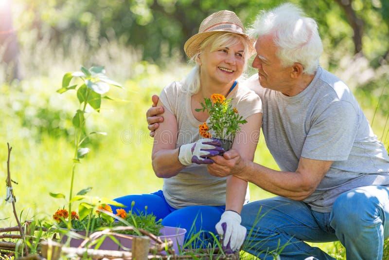 Senior couple gardening. Smiling happy elderly seniors couple gardening stock photography