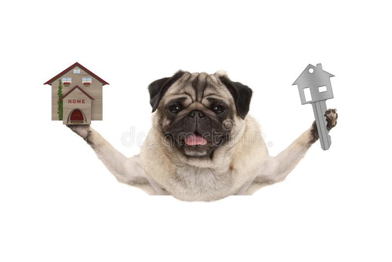 Smiling happy pug puppy dog holding up house key and miniature house. Isolated on white background stock photos
