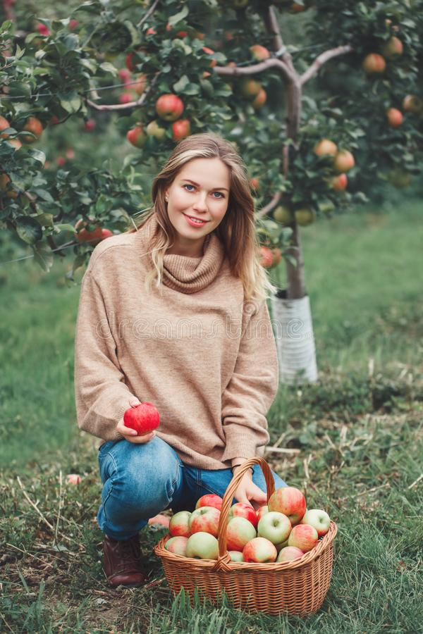 Smiling happy young blonde Caucasian woman on apple farm with wicker basket full of fruits stock photos
