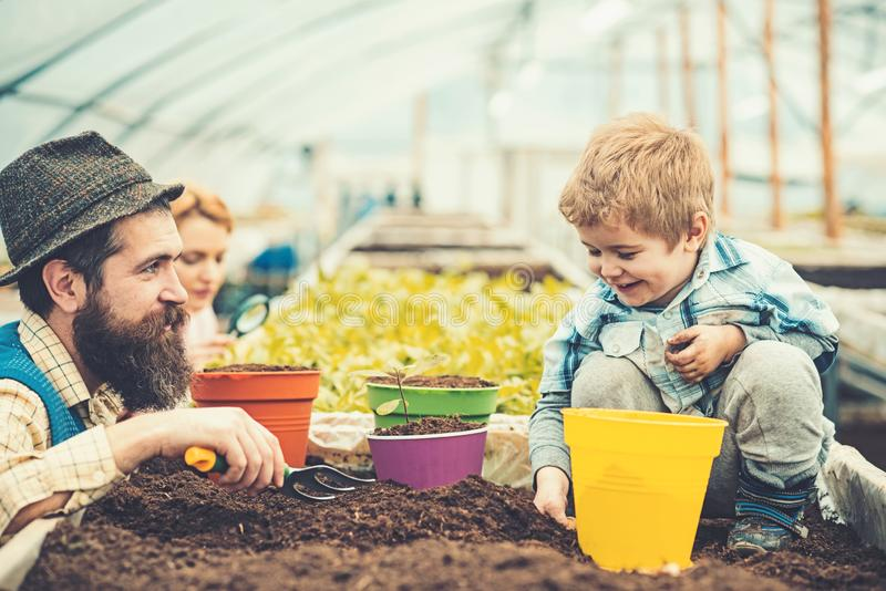 Smiling kid playing with daddy in greenhouse. Bearded man in blue vest, yellow shirt and hat looking at his son, mommy. Smiling kid playing with family in stock images