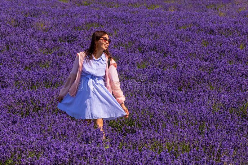 Smiling Young Lady posing in Lavender field, Worcestershire, England. A happy and smiling female Chinese tourist posing in a Worcestershire Lavender field stock images
