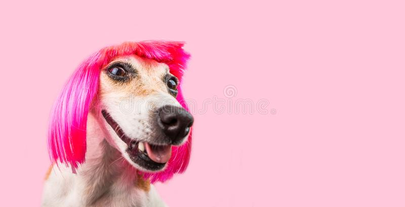 Smiling laughing trendy fashion dog in pink wig. Cool funny pup stock photo