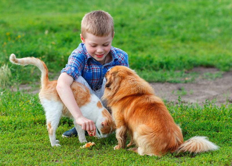 Smiling little boy feeds homeless cat and redhead stray dog in royalty free stock image