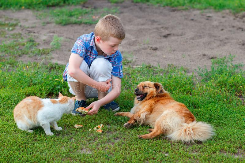 Smiling little boy in a plaid shirt feeds homeless cat and redhead stray dog in the yard, dog lies, cat - eats stock photos