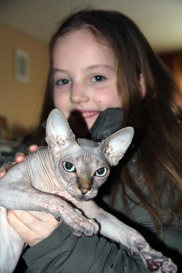 A smiling little girl is holding a Sphynx cat. Indoors royalty free stock photo