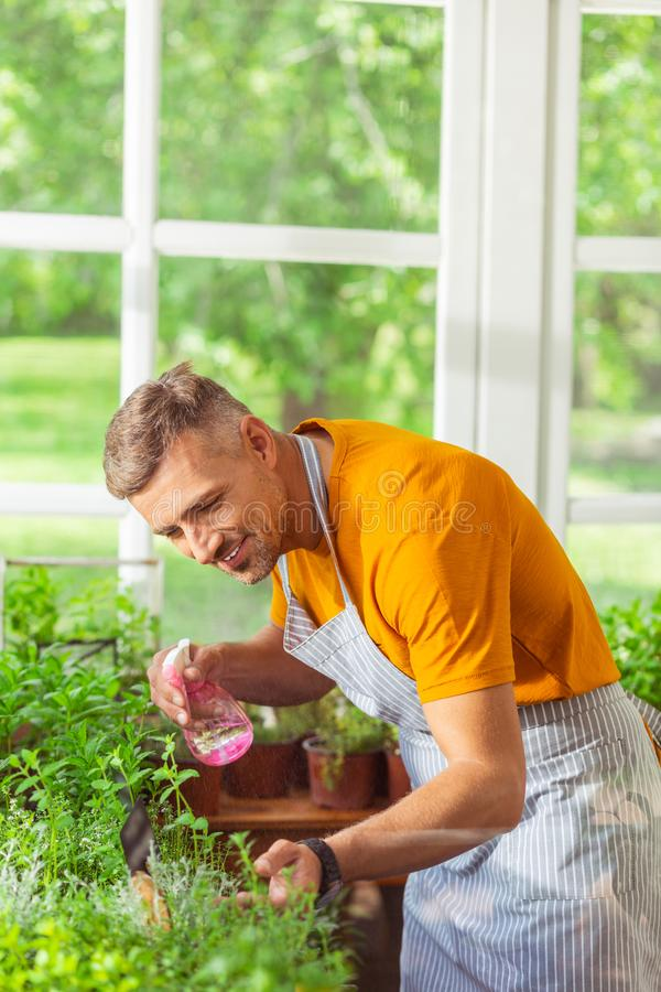 Smiling man bending forward sprinkling his plants. Being focused. Smiling man in a florist shop bending forward sprinkling his plants with water royalty free stock photo