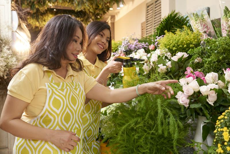 Florist and apprentice. Smiling mature Asian florist and her apprentice discussing assortment in store royalty free stock photography
