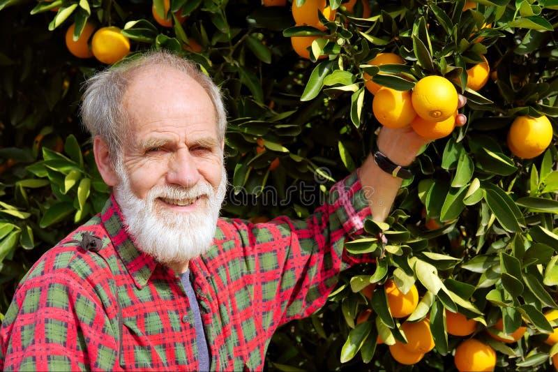 Smiling old farmer shows orange fruit royalty free stock photo