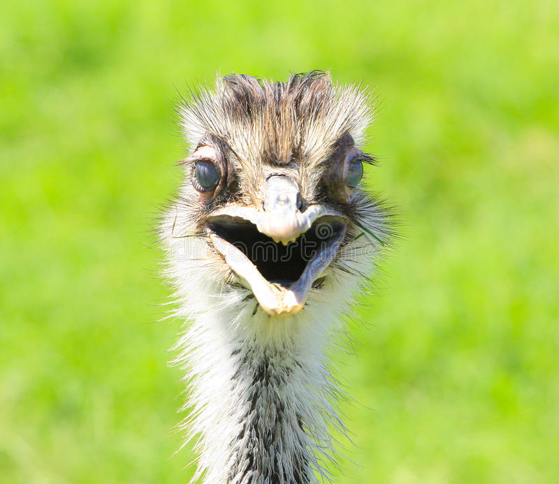Smiling ostrich and the World Wildlife Zoo in Arizona stock photos