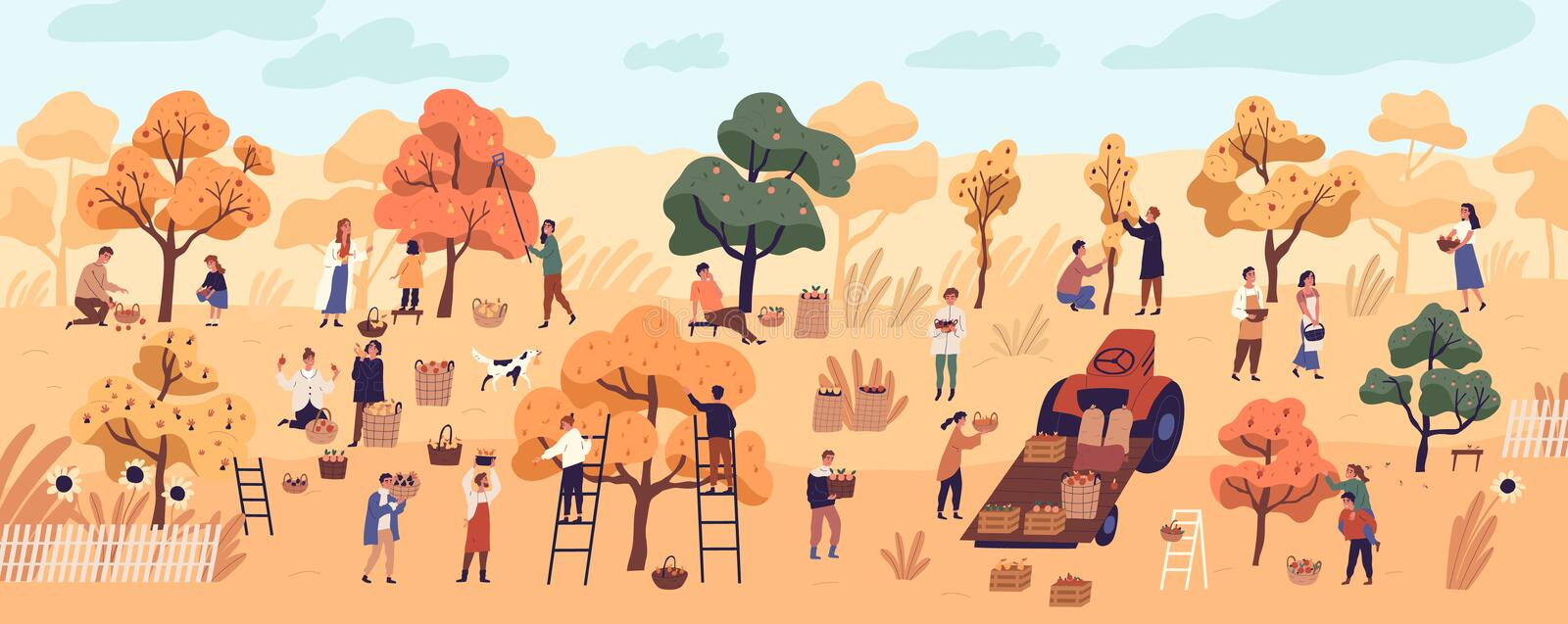 Smiling people gathering fruits in orchard or at farm. Cute happy young men and women picking apples in garden. Autumn vector illustration