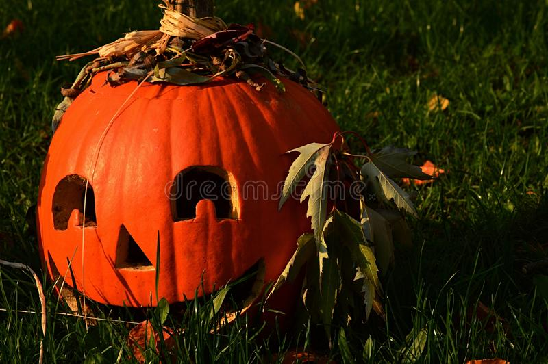 Smiling positive gouged out carved pumpkin as Halloween Jack O Lantern decoration with dried maple leaves as ears, sunbathing in m royalty free stock photography