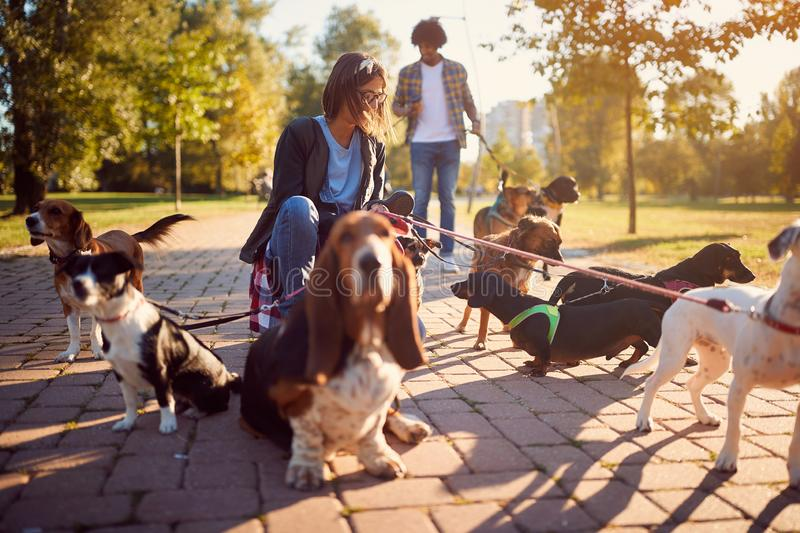 Smiling professional woman dog walker on the street stock photos