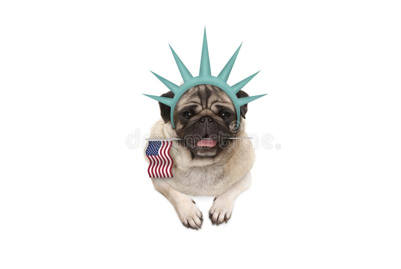 Smiling pug puppy dog holding American flag, hanging on white banner, wearing lady Liberty crown. Isolated royalty free stock photos