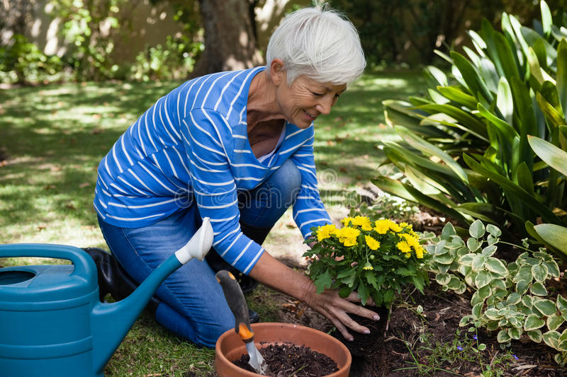 Smiling senior woman planting yellow flowers royalty free stock photos