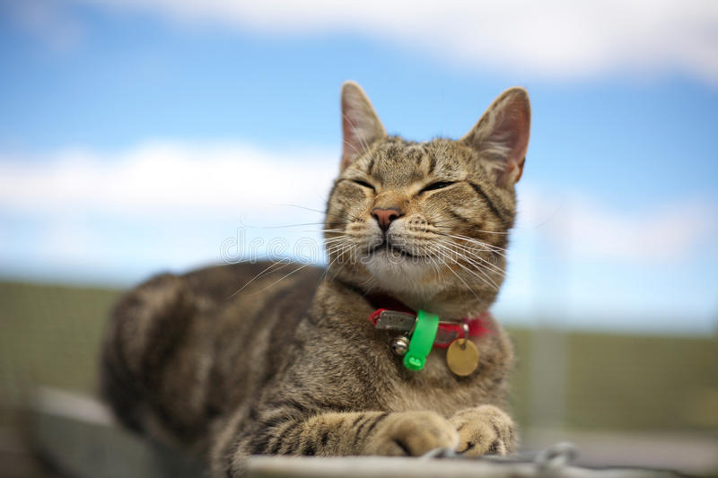 Download Smiling tabby cat stock image. Image of funny, feline - 17103169