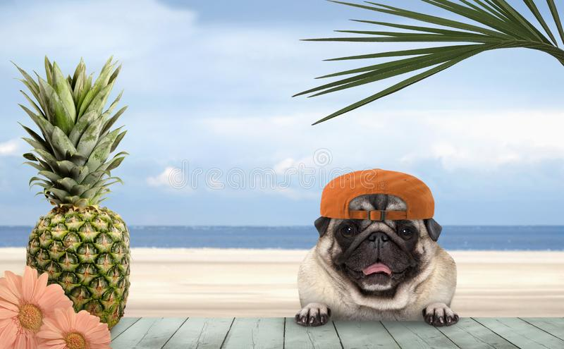 Tropical summer pug dog with orange cap, with paws on vintage green wooden table and sea and beach on background royalty free stock images