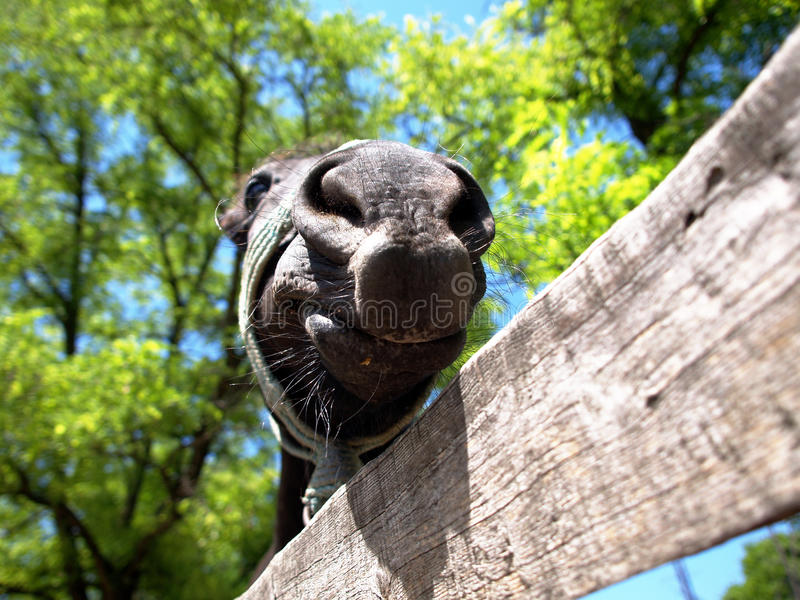 The smiling ugly horse royalty free stock images