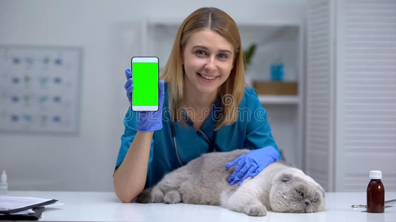 Smiling vet with lazy cat showing smartphone, pet health checkup record online. Stock photo stock photo