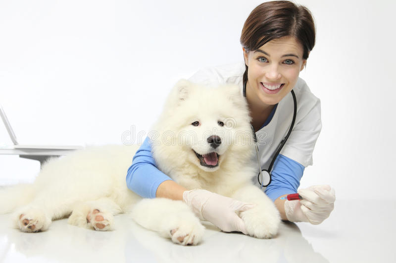 Smiling veterinarian with dog in vet clinic, blood exam stock image