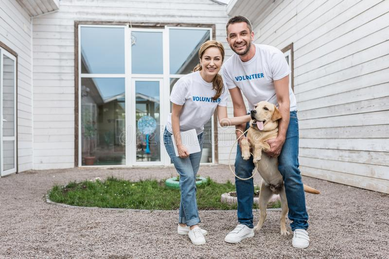 Smiling volunteers of animals shelter palming labrador and looking. At camera royalty free stock image
