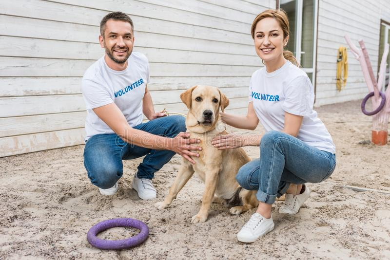 Smiling volunteers of animals shelter squatting. And palming labrador royalty free stock images