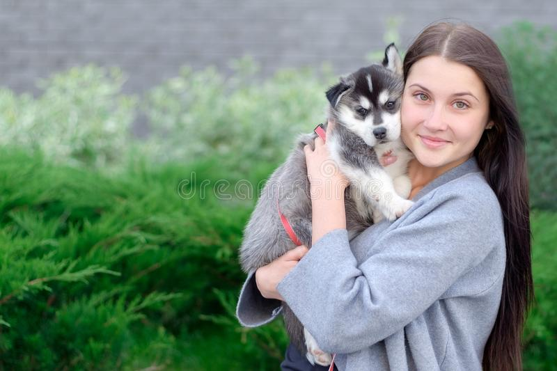 Smiling woman holding cute husky puppy stock photos