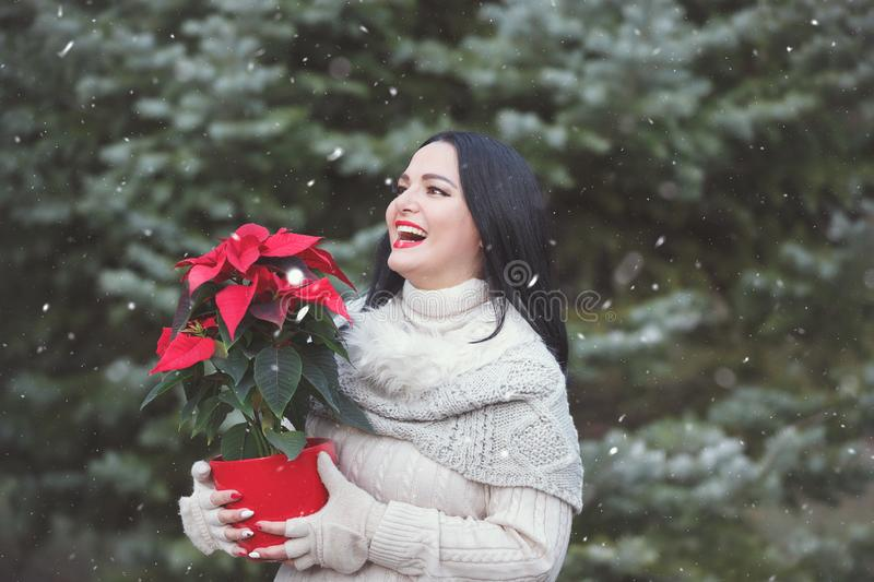 Smiling Woman Holding Pot With Christmas Red Poinsettia Plant stock photo