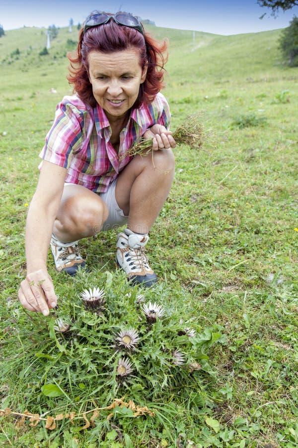 Free Smiling Woman Picking Herbs Stock Image - 32934741