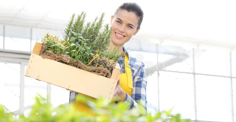 Smiling woman with wooden box full of spice herbs on white background, spring garden. Concept royalty free stock image