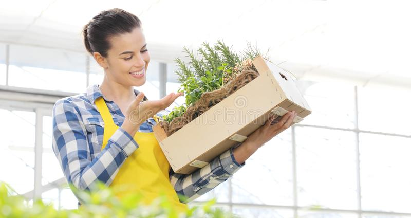 Smiling woman with wooden box full of spice herbs on white background, spring garden. Concept stock image