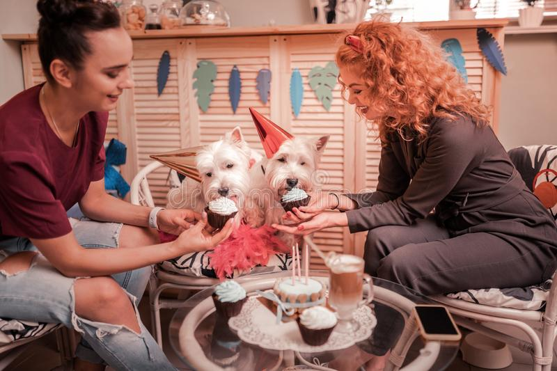 Smiling women giving cupcakes for their birthday dogs. Cupcakes for dogs. Smiling happy young women giving cupcakes for their birthday dogs royalty free stock image