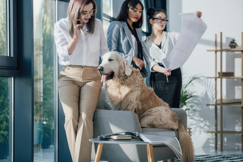 Smiling young businesswomen in formal wear working and having fun with golden retriever dog in modern office stock photos