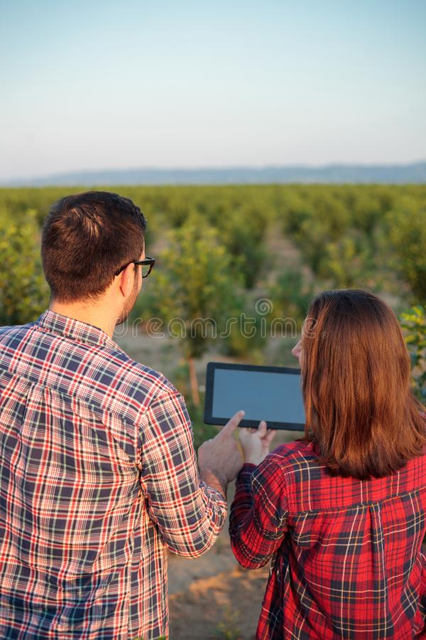Smiling young male and female farmers or agronomists inspecting fruit orchard. View from behind stock photo