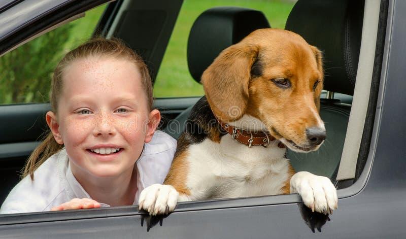 Smilling女孩和小猎犬小狗在汽车 库存照片