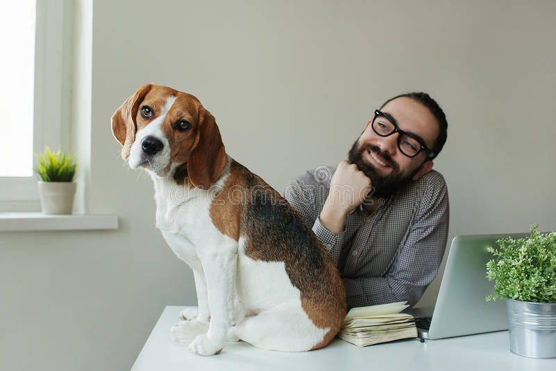 Smilling man in glasses with beagle on table stock photo