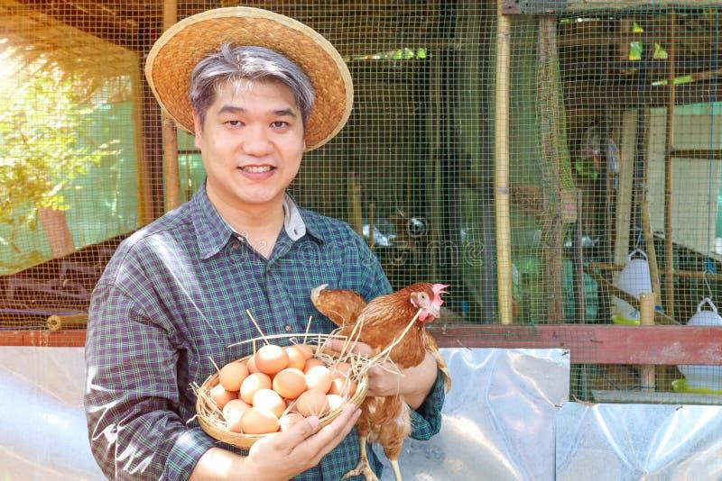 Smilling midle变老了鸡蛋灰色头发人手藏品鸡和篮子在他们的henshouse、农厂、庭院和所有者事务的 免版税库存图片