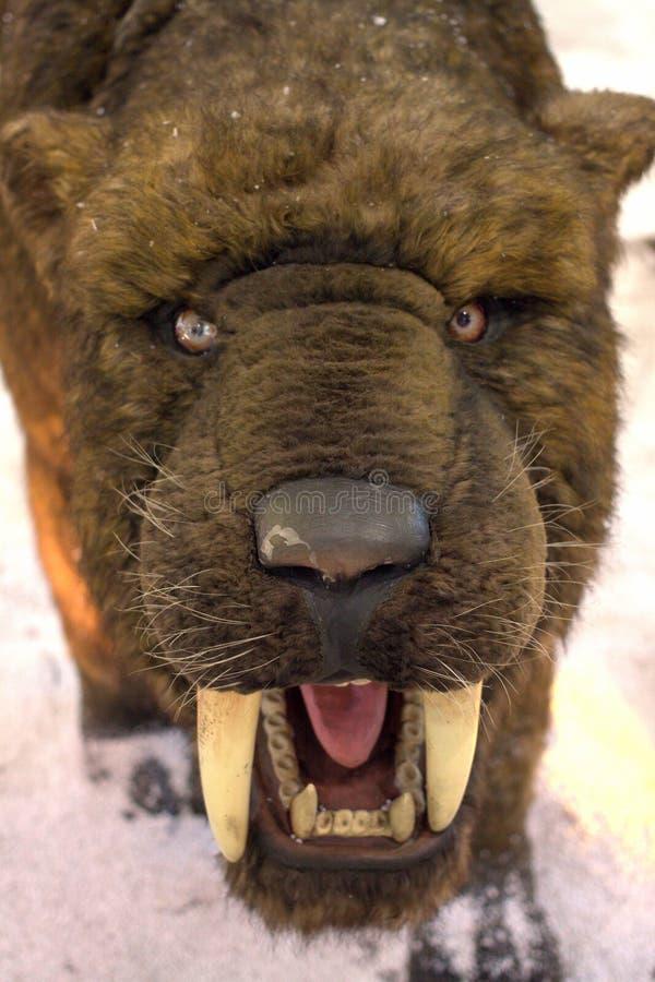 Smilodon Populator - tigre sabre-dentado imagens de stock royalty free