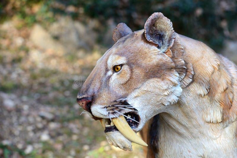 Smilodon - Saber zębu tygrys zdjęcia stock
