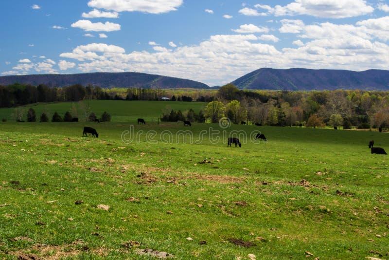 Smith Mountain Huddleston, Virginia, de V.S. royalty-vrije stock fotografie