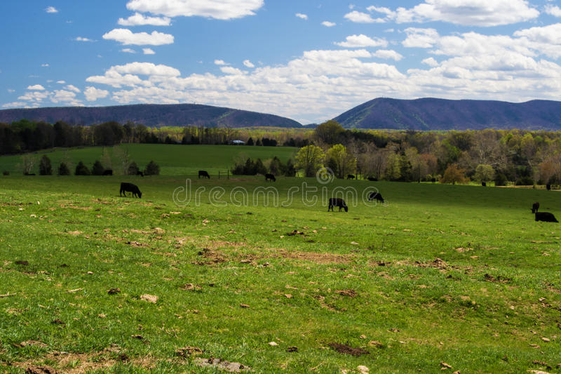 Smith Mountain Huddleston, Virginia, USA. A view of Smith Mountain located in Huddleston, Virginia, USA with cows and farmland in the foreground royalty free stock photography