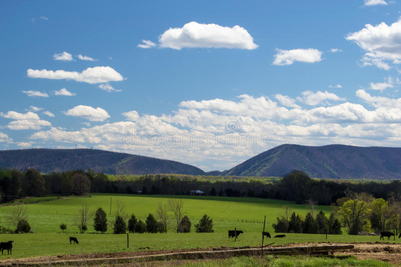Smith Mountain Huddleston, Virginia, USA. A view of Smith Mountain located in Huddleston, Virginia, USA with cows and farmland in the foreground royalty free stock photos