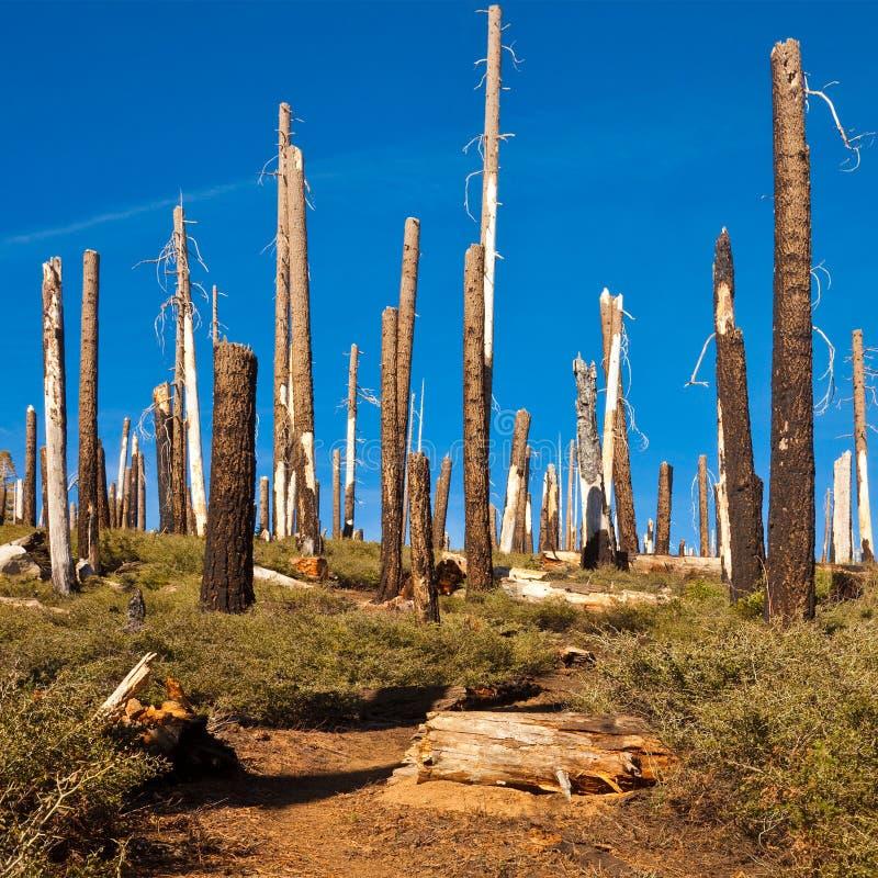 Download Smith Peak Trail stock image. Image of stump, black, california - 16726519