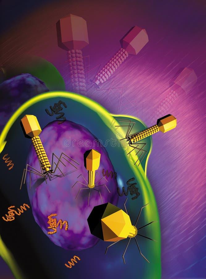 smittad bakteriecell royaltyfri illustrationer