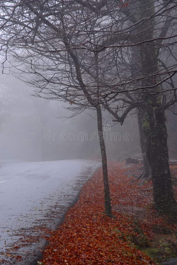 Smog lizenzfreie stockfotos