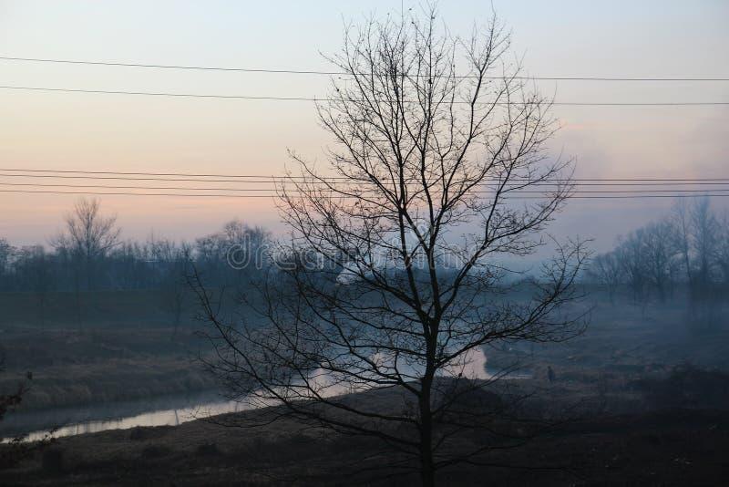 Smog i dalen och ett träd framme arkivfoton
