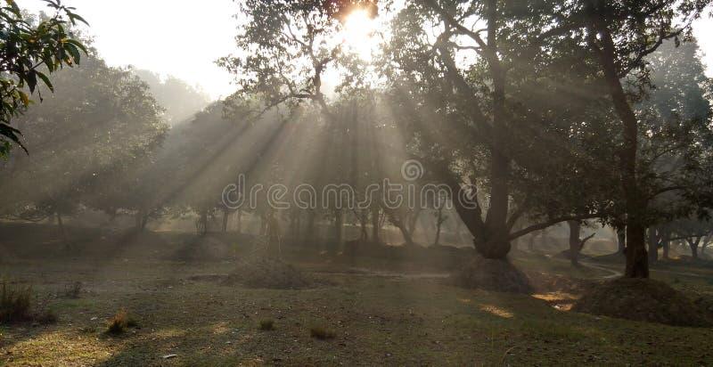 Smog und Sonnenlicht morgens stockbilder