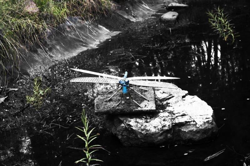 Smok komarnicy rzeźba na strumieniu fotografia stock