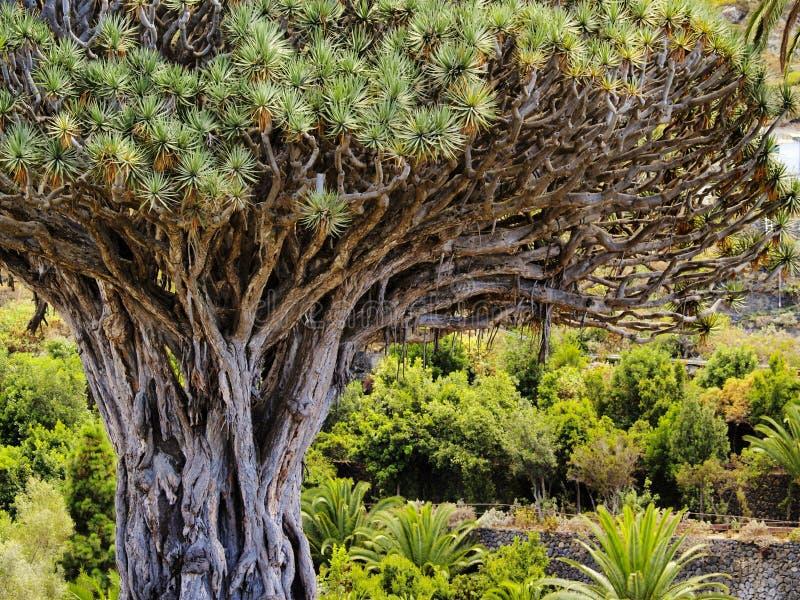 Smoka drzewo obraz stock