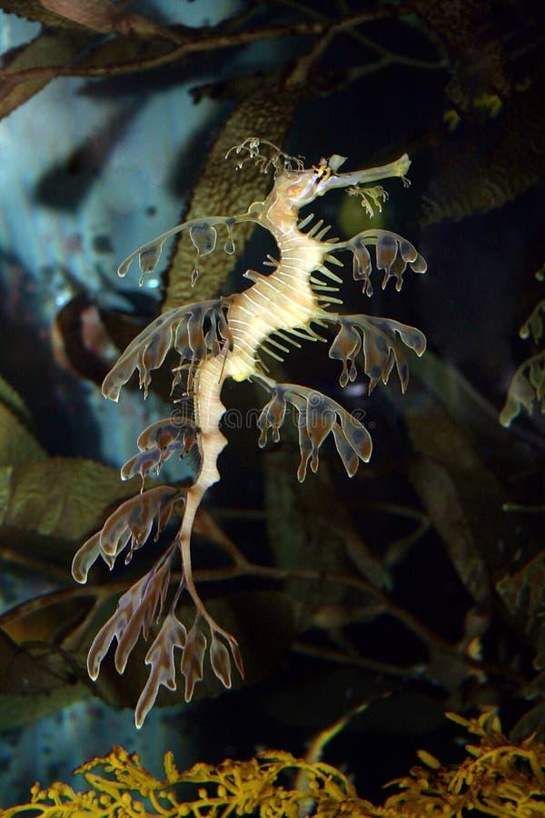 smoka morze zdjęcie royalty free